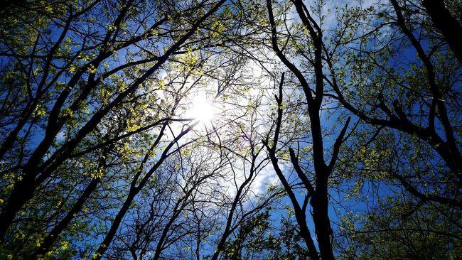 Landscapes With WhiteWall Sunshine Sunlight Nature Trees White Rock Lake