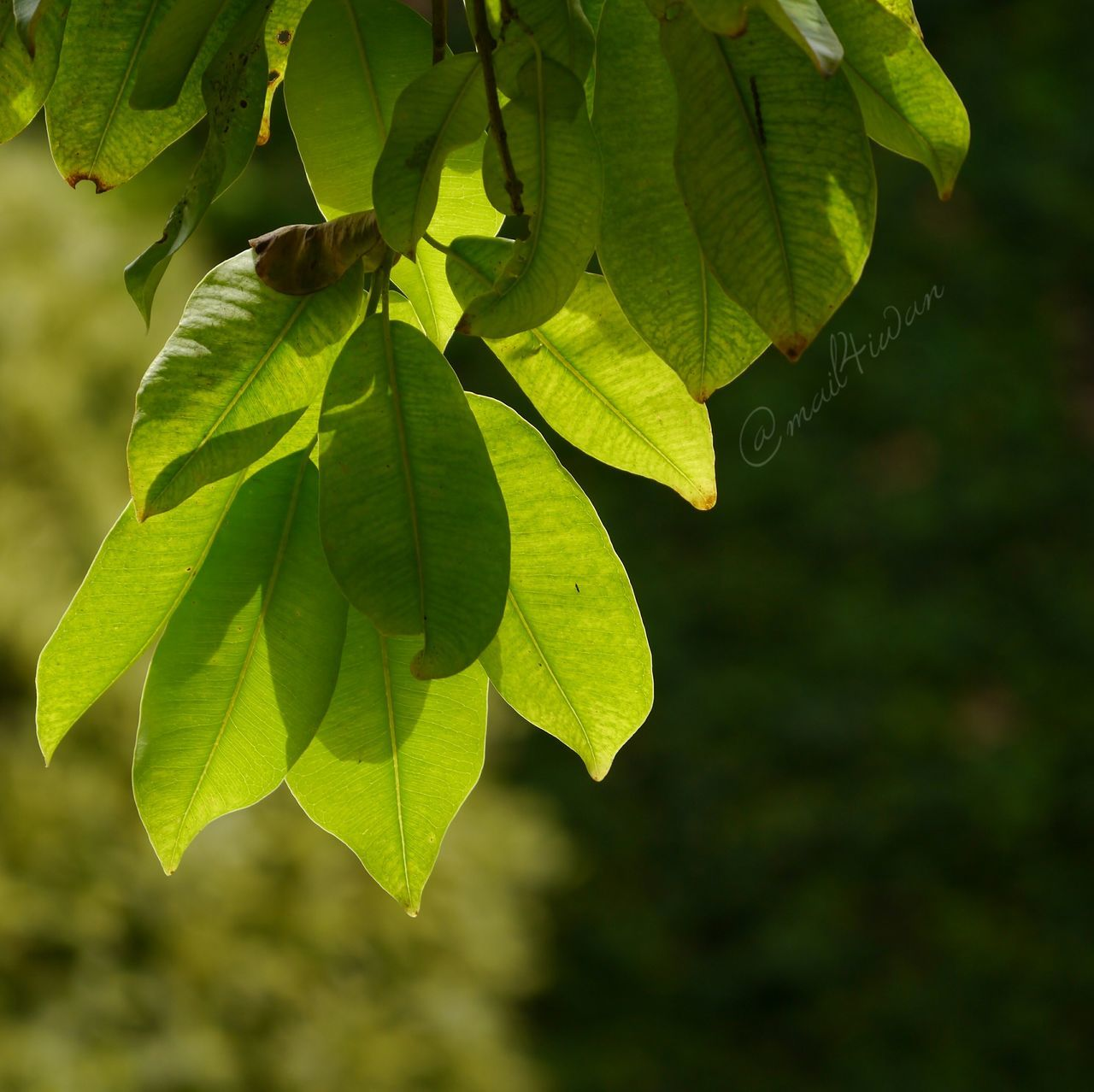 Leaf Nature Green Color Plant Close-up Growth No People Beauty In Nature Outdoors Freshness Day Tree Fragility