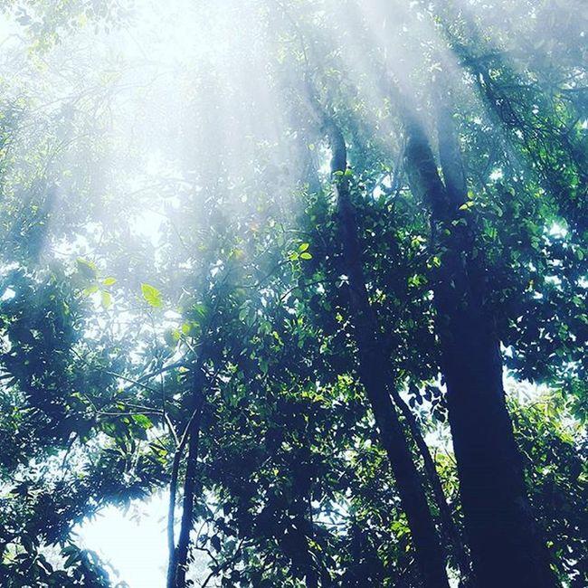 BaVinationalpark Trees Light Peace VSCO Withfriend