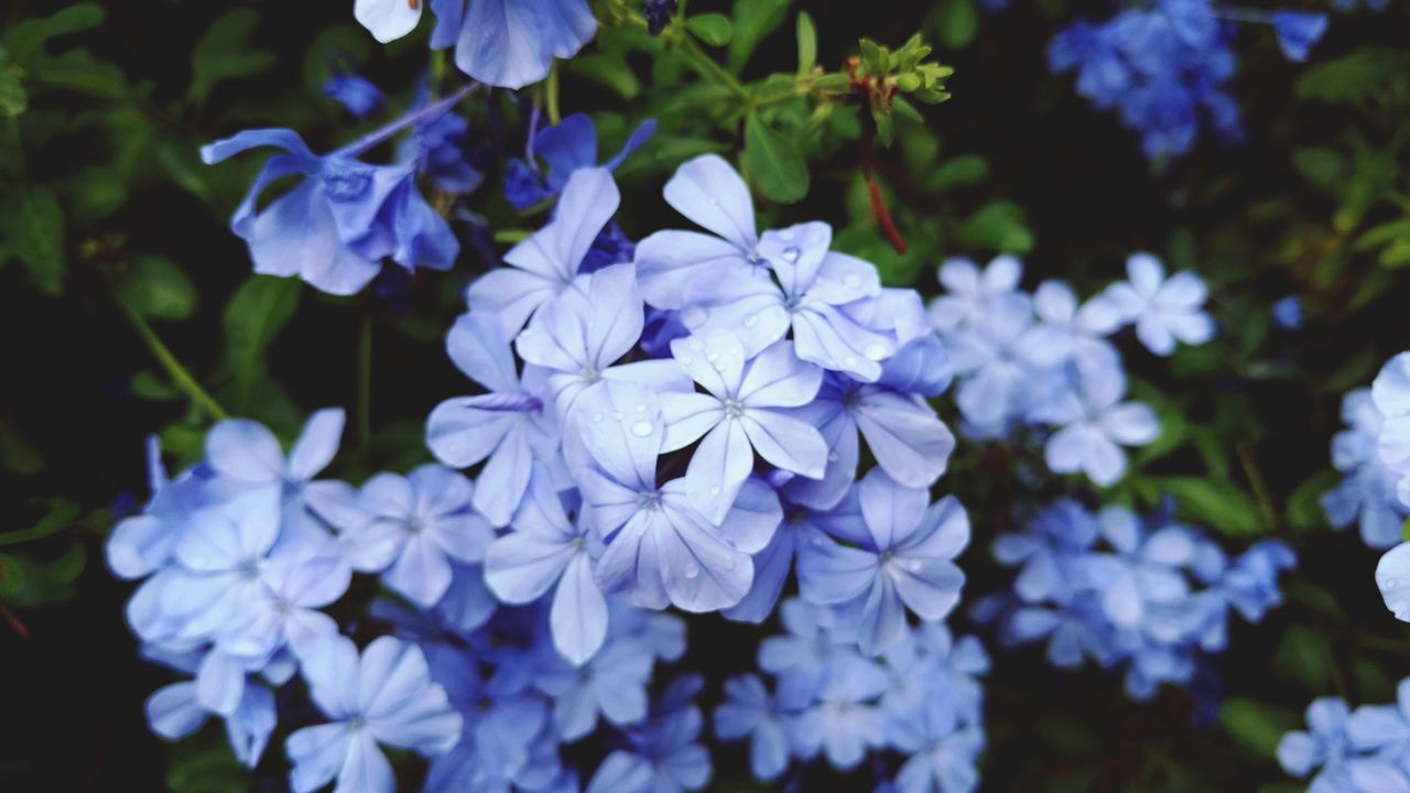 Flower Purple Nature Beauty In Nature Petal Growth Outdoors Close-up Hydrangea Fragility Plant Day No People Flower Head Freshness Ngwoosh Houston Life Green Color Growth Nature