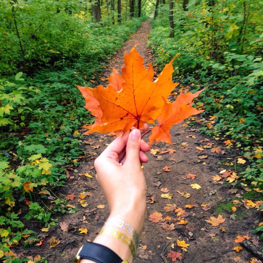 Autumn Leaves Forestwalk October Sweet October! золотаяосень свежийвоздух Лес Flora Botany Nature