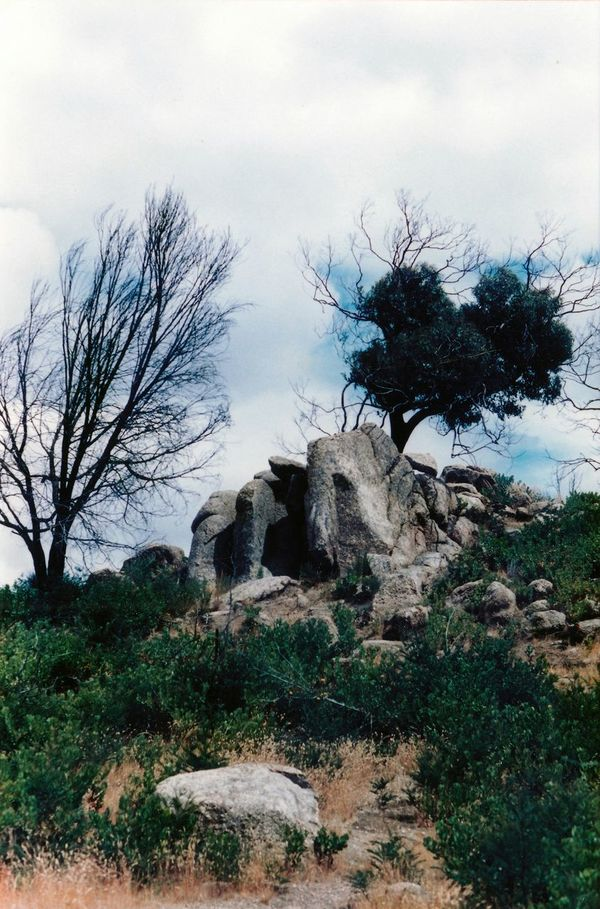 You Yangs Park Victoria Landscape Australia Learn & Shoot: Balancing Elements Trees And Sky Landscapes With WhiteWall