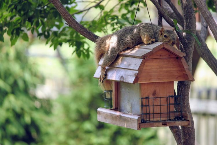 Squirrel Tired EyeEm Selects Animal Wildlife Animals In The Wild Animal Themes One Animal Mammal No People Food first eyeem photo