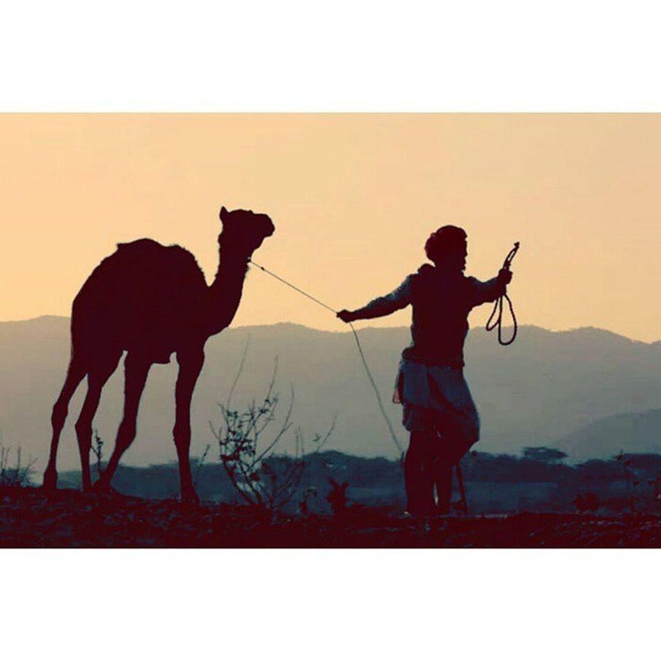 Pushkar Fair 2013 Rajasthan India Camel Desert Sky Golden Megical Music Art Love Folk Culture Shadow Rebari Travel Life Long Missing Once Again This Year joinmeinpushkar