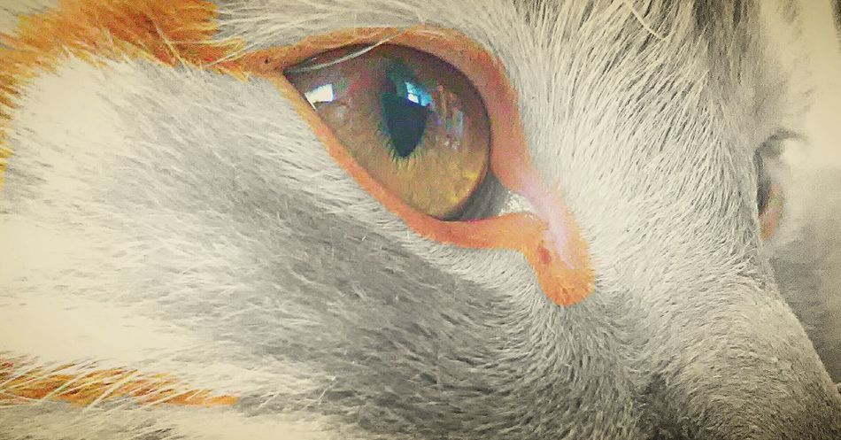 This is my cat Tyger. Hope you like it. And dont forget to follow me. Like4like Winter Followme Huaweiphotography South Africa Oo Photography Experimental Edit Follow4follow Portrait Colour Splash Huawei Cat Orange Cat Pictures