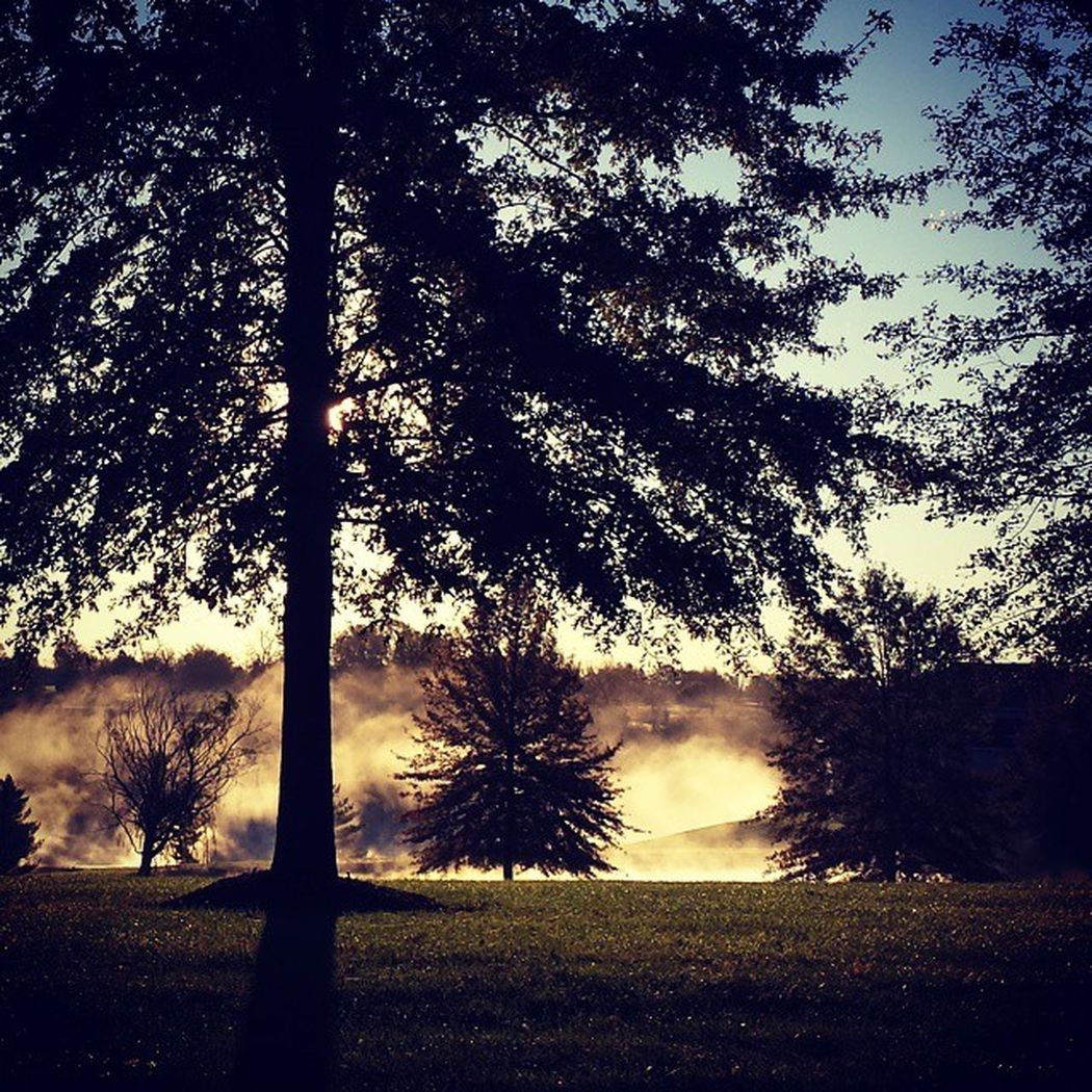 Midwest Autumn Morning Natures Mysteries Sunrise Mystical One With Nature Peace Serenity Higher Power Beautiful Treescape Misty Morning Feeling Free Protecting Where We Play