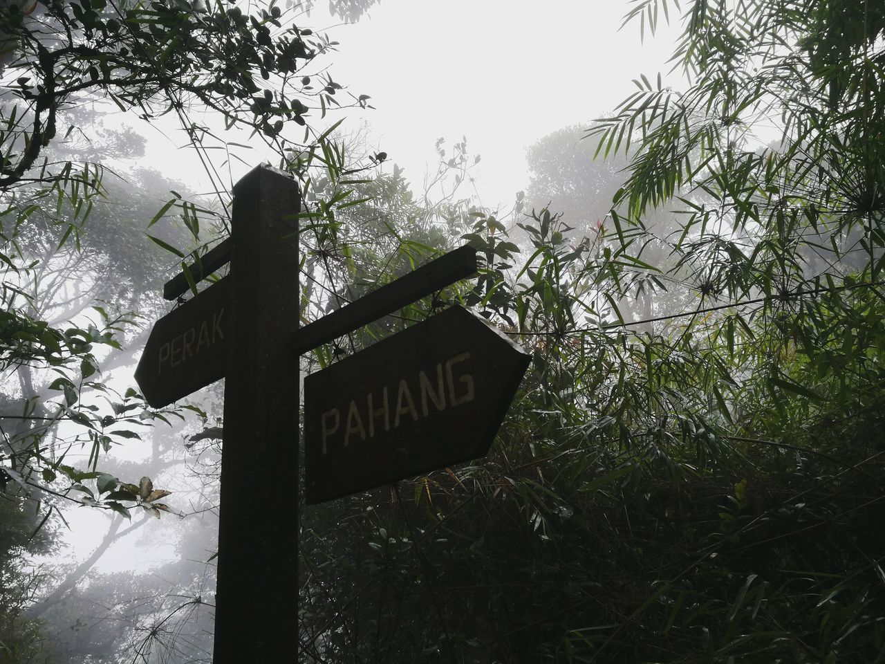 Rainforest Walks Gunungirau Cameroon Highlands Signboard Which Way To Go?