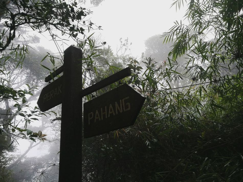 Rainforest Walks Gunungirau Cameroon Highlands Signboard Which Way To Go?