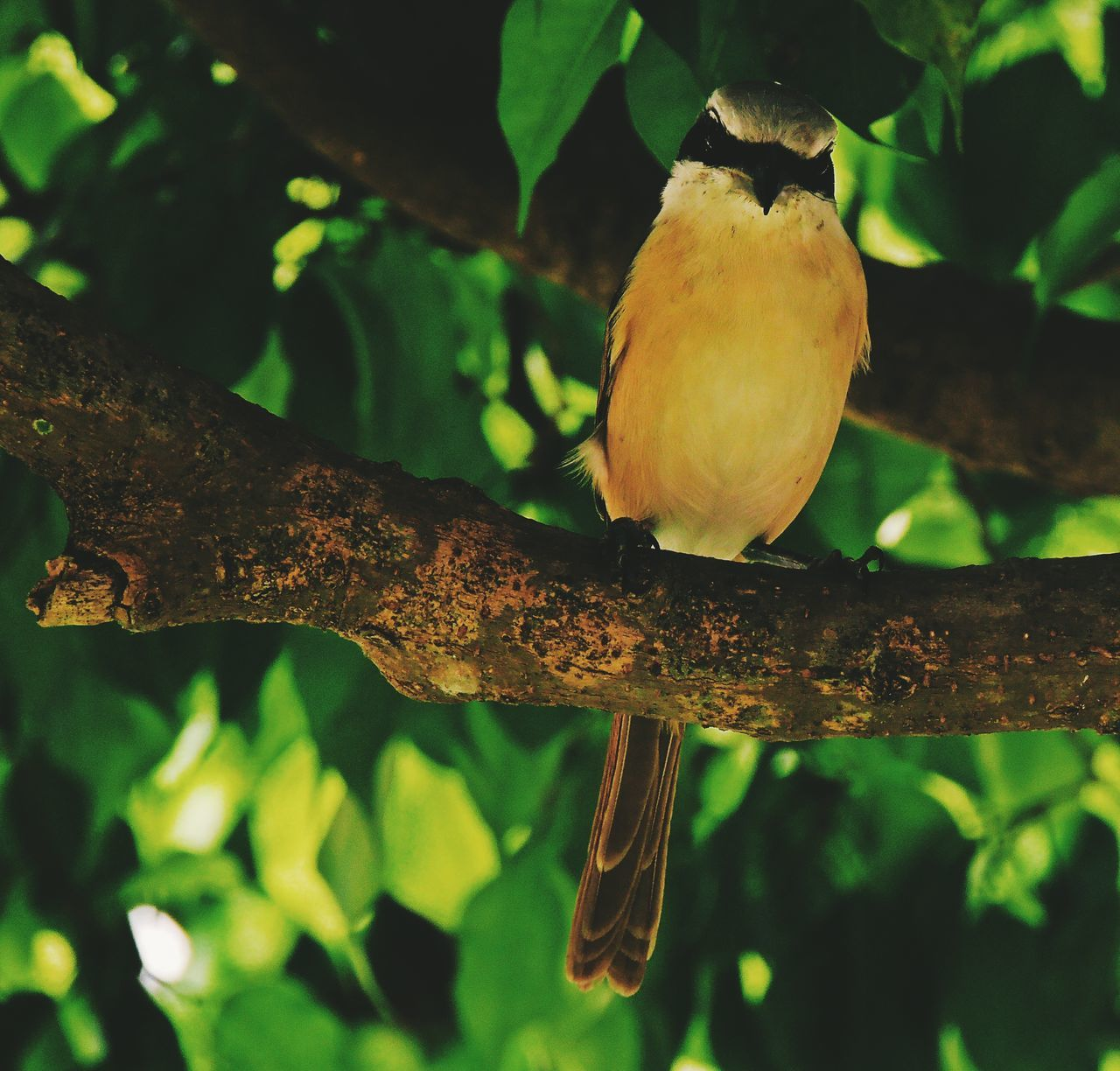 On a tree located beside the tomb rests a bird, just like souls when they finally find their piece of heaven. Global EyeEm Adventure - Philippines AllSaintsDay The Great Outdoors - 2015 EyeEm Awards