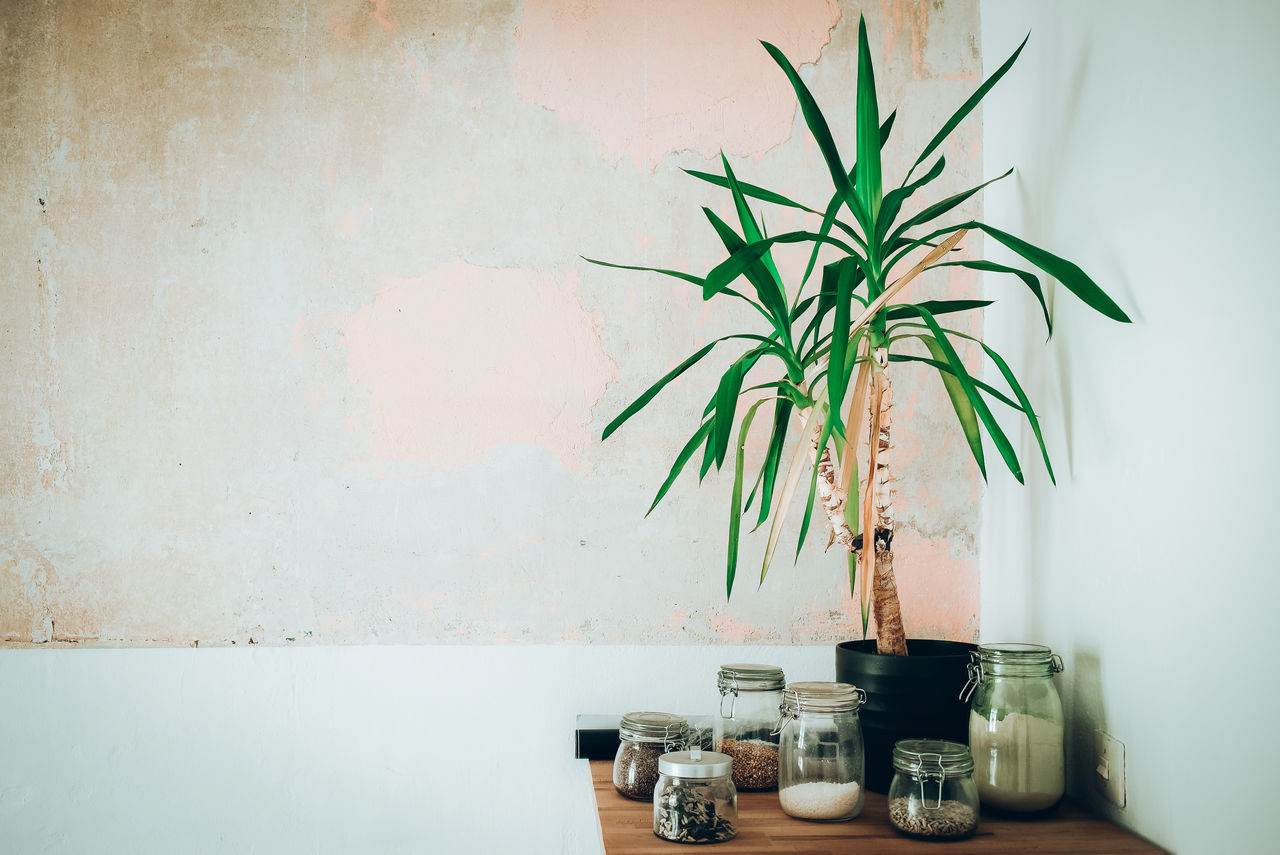 day design flat home interior indoors interior design Low Key minimal design minimalistic no people Plant table