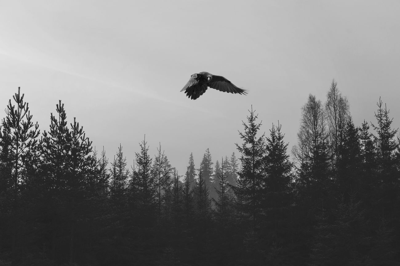 the raven Lucky's Monochrome Monochrome EyeEm Best Shots - Black + White Black And White Black & White Blackandwhite Photography Black And White Love Raven Frozen In Time Melancholic Landscapes Landscape Tranquility Silence Shootermag EyeEm Gallery Eye4photography  Contrast Mood Sound Of Life Soulseeker Surreal Rebirth Notes From The Underground Soul Catcher Foggy