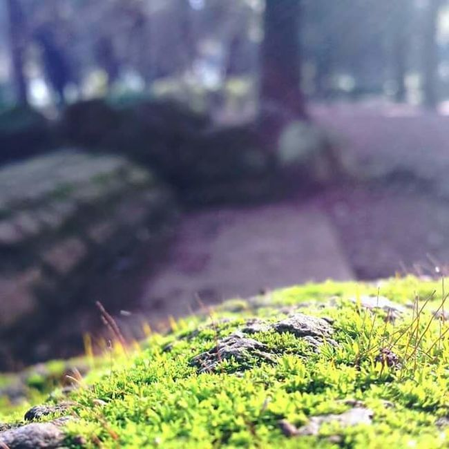Detail Details Bellezza First Eyeem Photo Travel Photography Picoftheday Photooftheday Around The World Bellezzanellasemplicità Light And Shadow Lights Photography Enjoying Life Travel Beautiful Day Taking Photos Nature Green Prato Natura Natural Beauty Villa Borghese Villa Borghese Park Parco