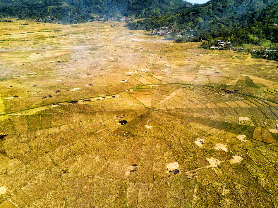 Aerial view of the spider rice fields at harvest time in Ruteng, Indonesia. DJI X Eyeem Agriculture DJI Mavic Pro Flores Island INDONESIA Rice Spider Tourist Travel Travel Photography Aerial Aerial Photography Aerial View Destination Dji East Nusa Tenggara Flores Harvest Landscape Rice Fields  Spider Rice Fields Tourism Tropical Vacation Yellow