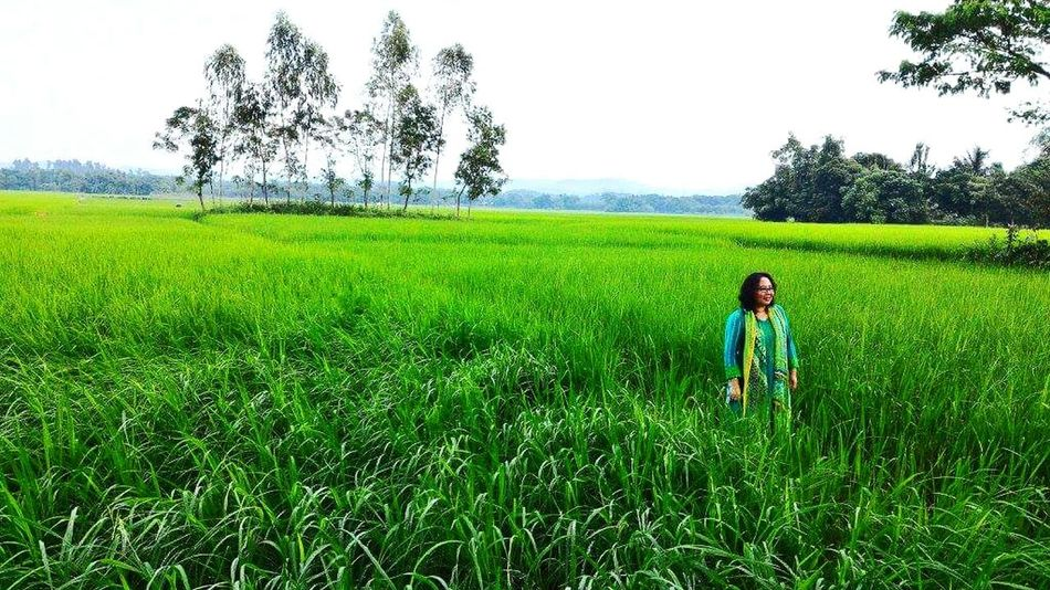 Bangladesh 🇧🇩 Nature Green Green Green!  Green Color InTheMiddleOfNoWhere Mobilephotography Mobile_photographer Outdoors Day Xiaomiphotography Nature Photography Rice Field Green Nature Eyeemphotography Durgapur 2016 Picture