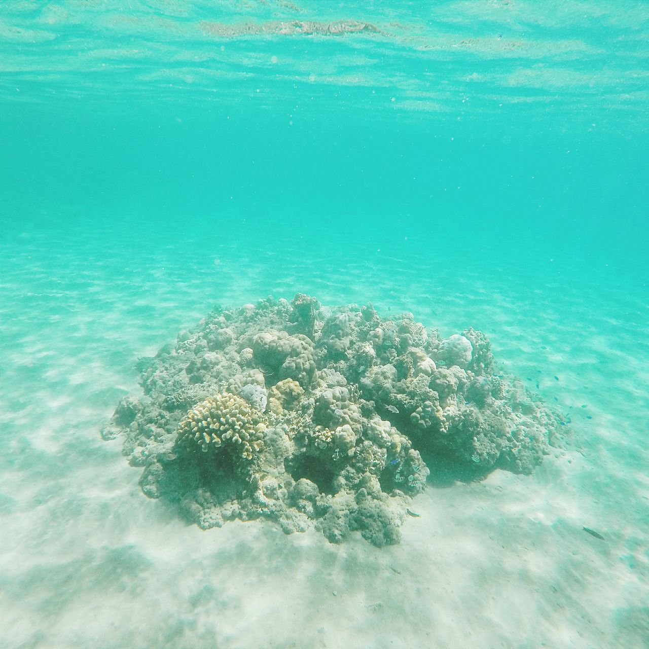 View from down under. Underthesea Ocean Corals Goprohero4 Summer Swimming Summerheat Natures Diversities