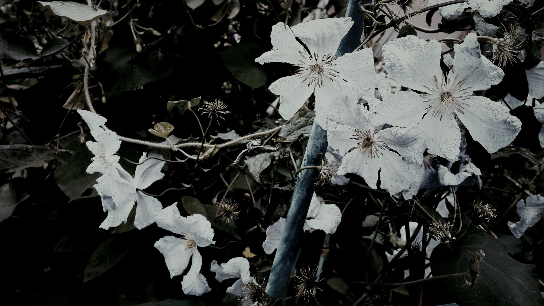 Beauty Flowers Nature Calm
