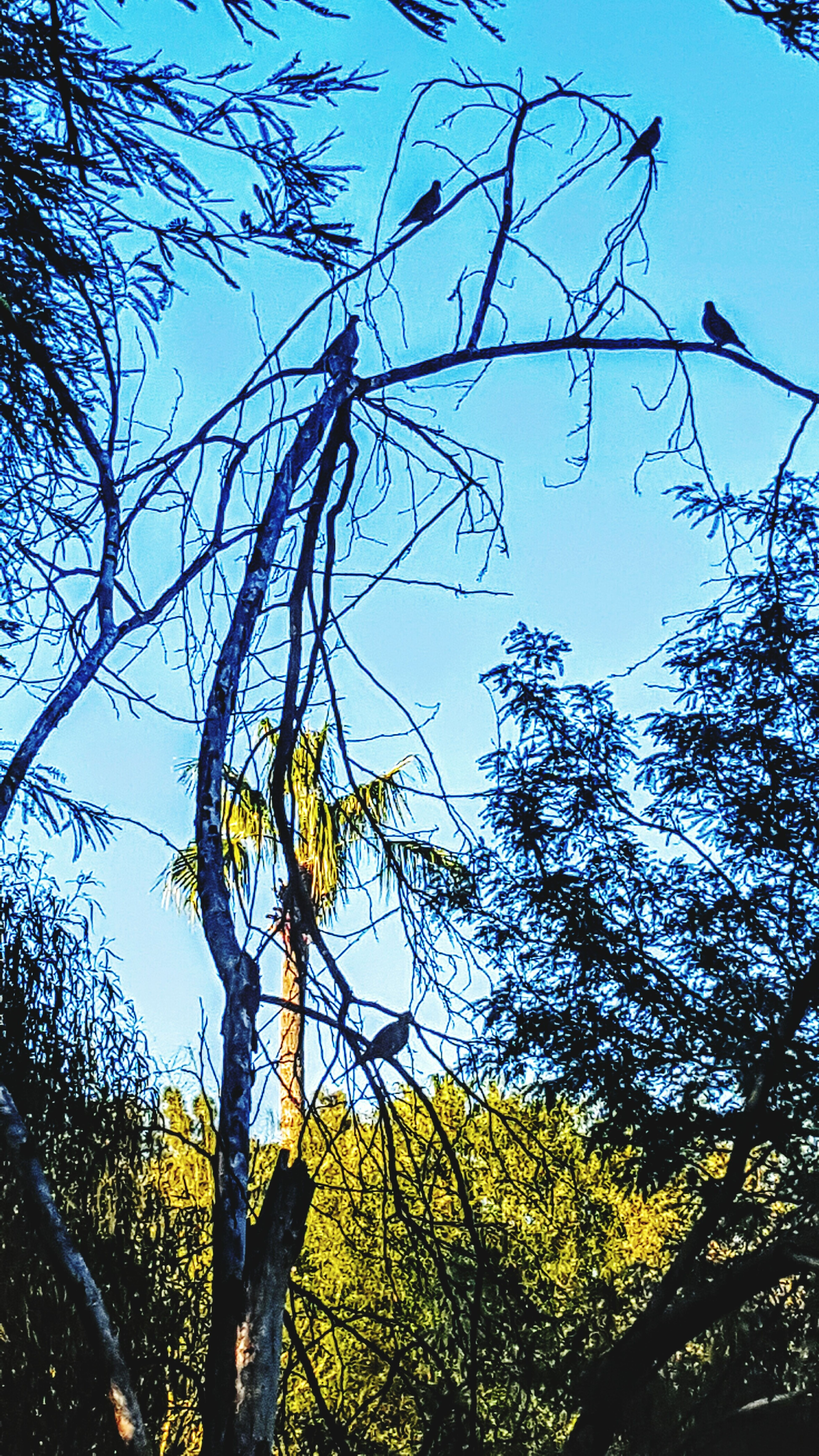Hello World Washnexttothehouse Checkthisout Birds🐦⛅ Hanging Out Dead Tree FavoriteHangout Enjoying Life Outdoor Photography Skies At Dusk End Of The Day