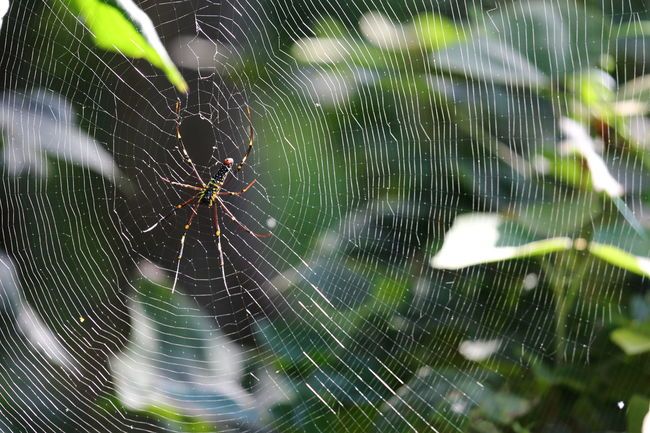 Animal Themes Animals In The Wild Arachnid Beauty In Nature Close-up Day Focus On Foreground Fragility Green Color Insect Intricacy Natural Pattern Nature No People One Animal Outdoors Scenics Spider Spider Web Spiderweb Survival Web Zoology