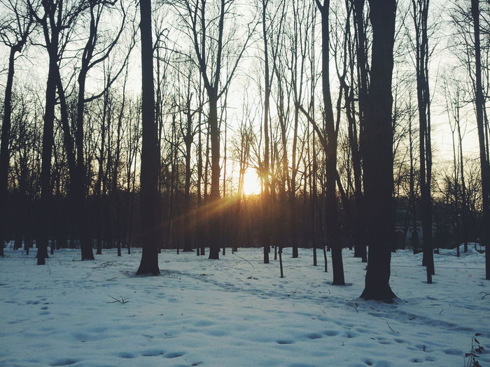 Nature Winter Tree Snow Sunlight Beauty In Nature Cold Temperature Sunset Landscape Sun Scenics Outdoors Forest Sky No People Moscow Moscow City Moscow, Москва Moscow, Russia Gorky Park Gorky Park (Moscow) Day EyeEmNewHere Winter Sunset Winter Sun The Great Outdoors - 2017 EyeEm Awards Shades Of Winter