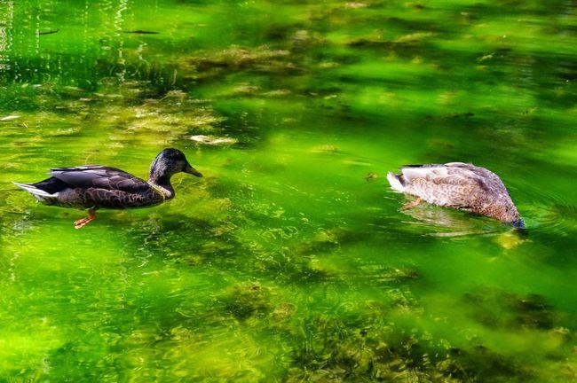 Streamzoofamily EyeEm Nature Lover Españoles Y Sus Fotos Eye4nature