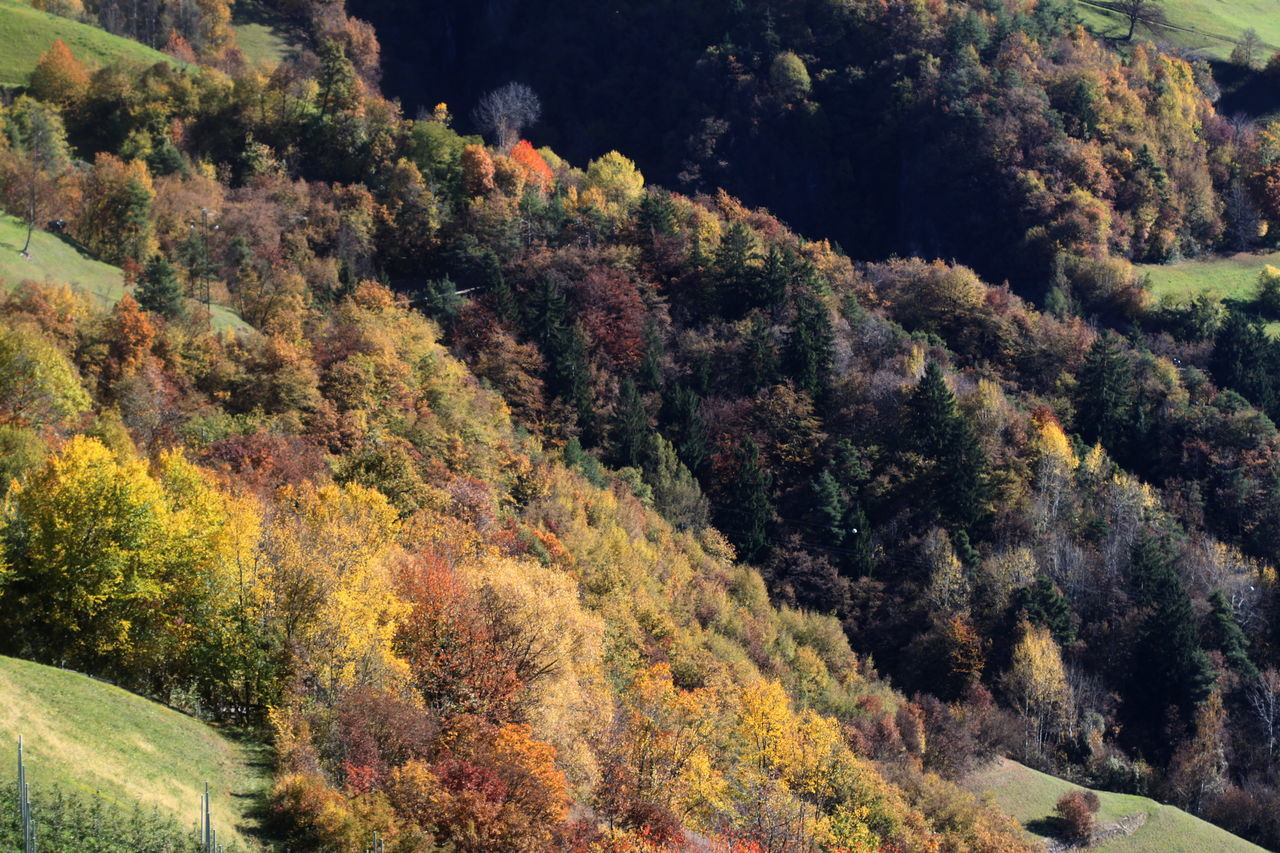 Autumn Autumn 2016 Beauty In Nature Day Fiè Allo Sciliar Forest Full Frame Growth Italy Landscape Lush Foliage Multi Colored Nature No People Outdoors Scenics Südtirol Trees And Bushes
