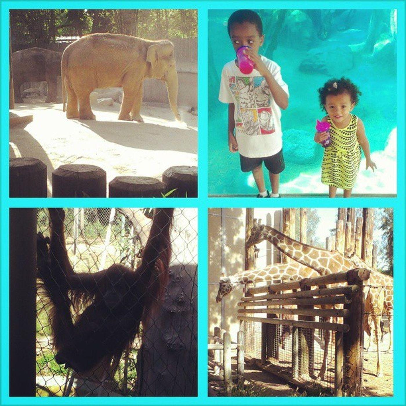 I had a great day at the #zoo with my family. #fresnochafeezoo Kids Love Fresnochafeezoo