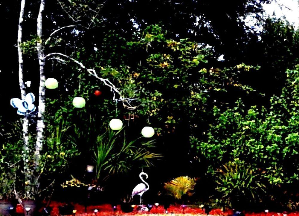 Garden Garden Photography Butterfly Flamingo Gardens Flamingo Backyard Backyard Garden Backyard Photography