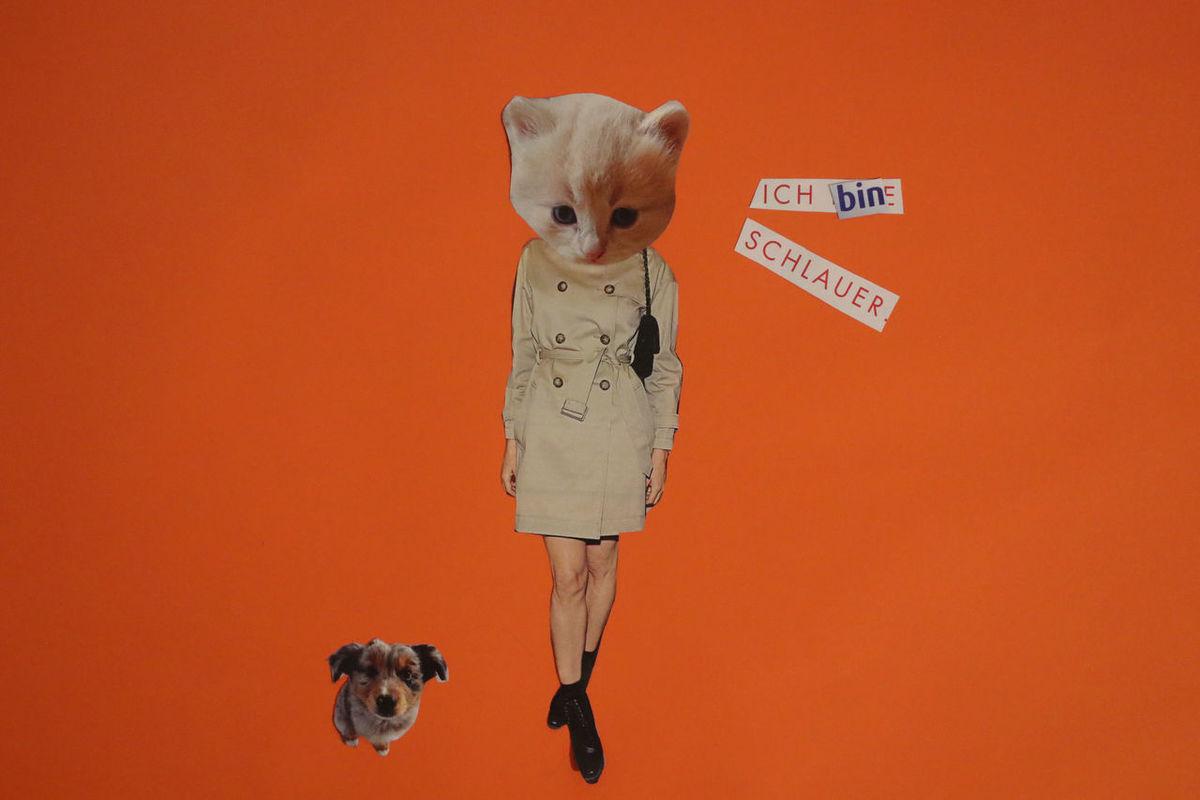 Angela Merkel Animal Themes Cat Cats Collage Craft Dog Domestic Animals Egg Funny Handmade Human Magic Mashup Orange Paper Paper Craft Pet Pets Politic Politics President Red Satire Studio Shot Cut And Paste Neon Life