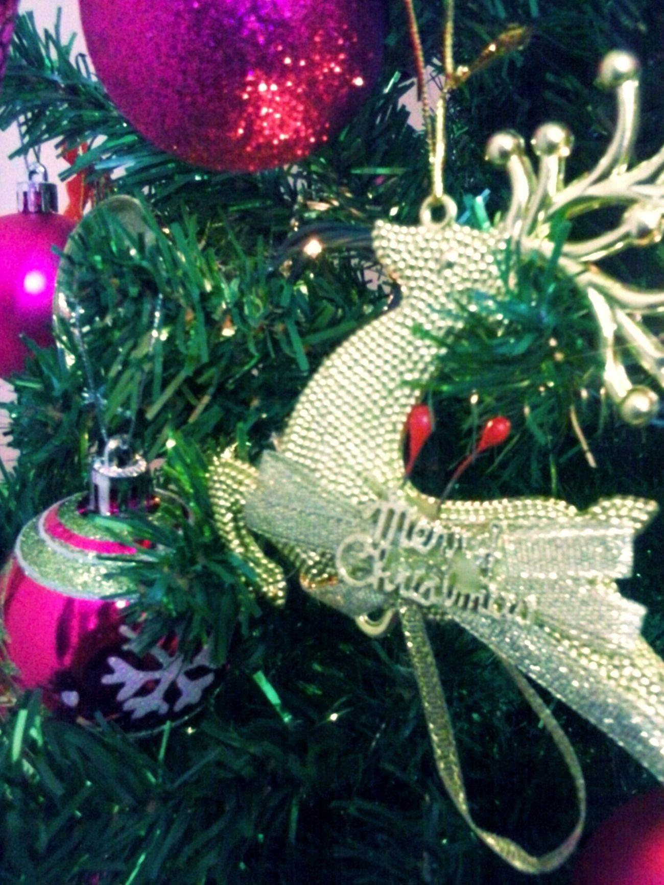 Christmas Tree Pontodevista Olhardebolso