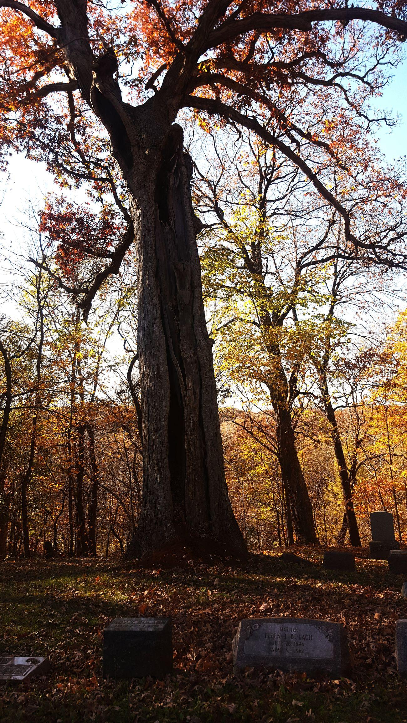 Autumnal Bliss Cemetary Beauty Fall Days