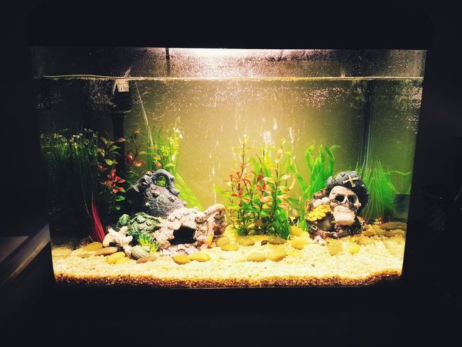 My new fish tank..but..no fish till 2 week's Taking Photos Fish Tank Home Sweet Home ♥ Theres Always Room For Improvement