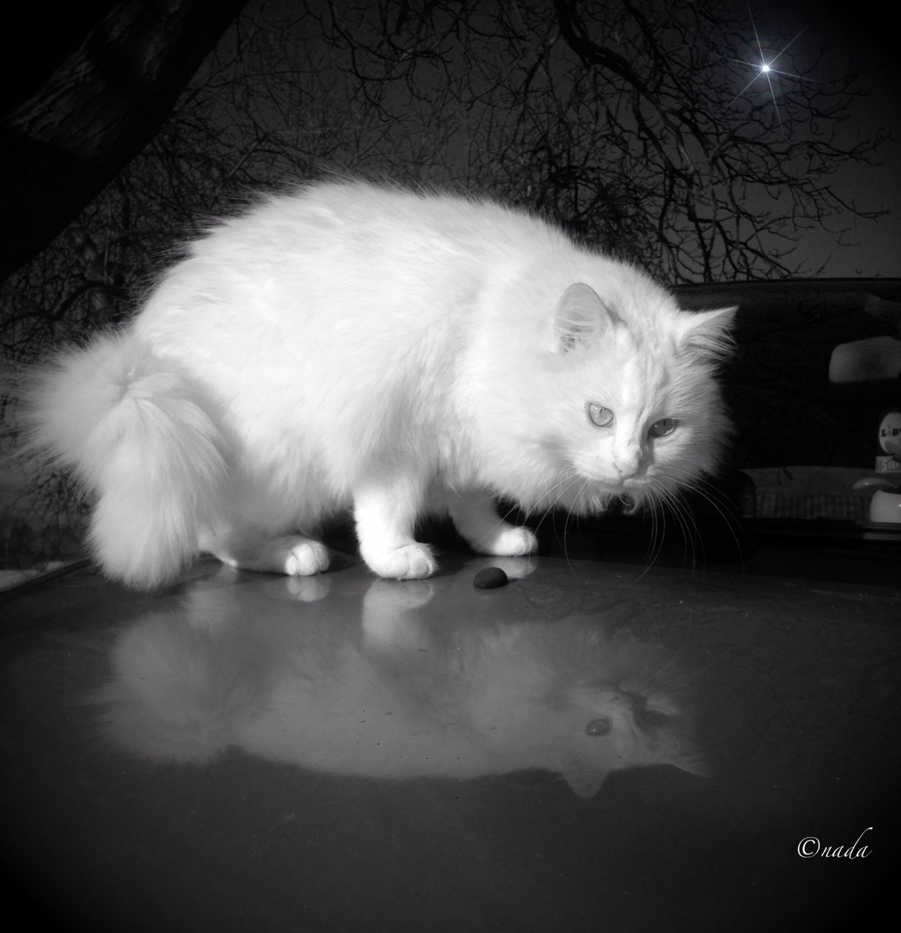 animal themes, one animal, pets, domestic cat, cat, domestic animals, mammal, indoors, feline, night, relaxation, whisker, sitting, white color, close-up, no people, full length, sleeping, looking away, cute