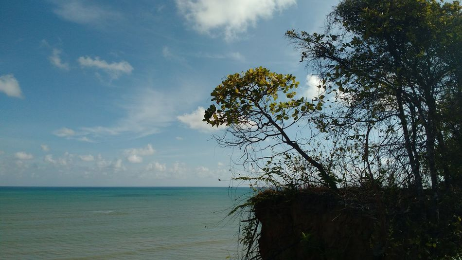 Tree Sea Nature Sky Horizon Over Water Tranquility Landscape Outdoors Beauty In Nature Sunset Beach Water Scenics Single Tree No People Day