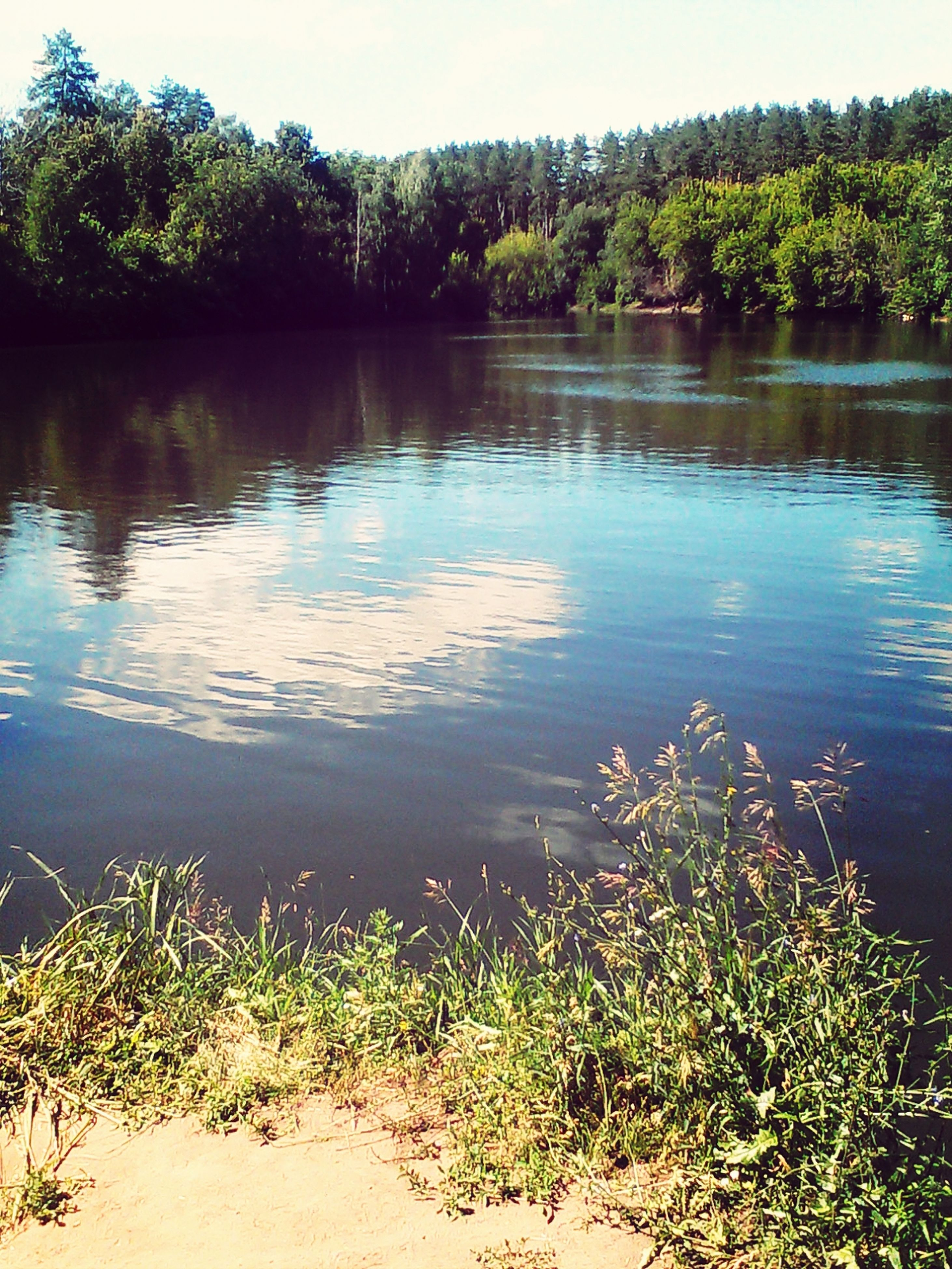 water, lake, tree, tranquility, reflection, tranquil scene, scenics, beauty in nature, nature, growth, plant, clear sky, lakeshore, idyllic, green color, day, outdoors, rippled, no people, calm