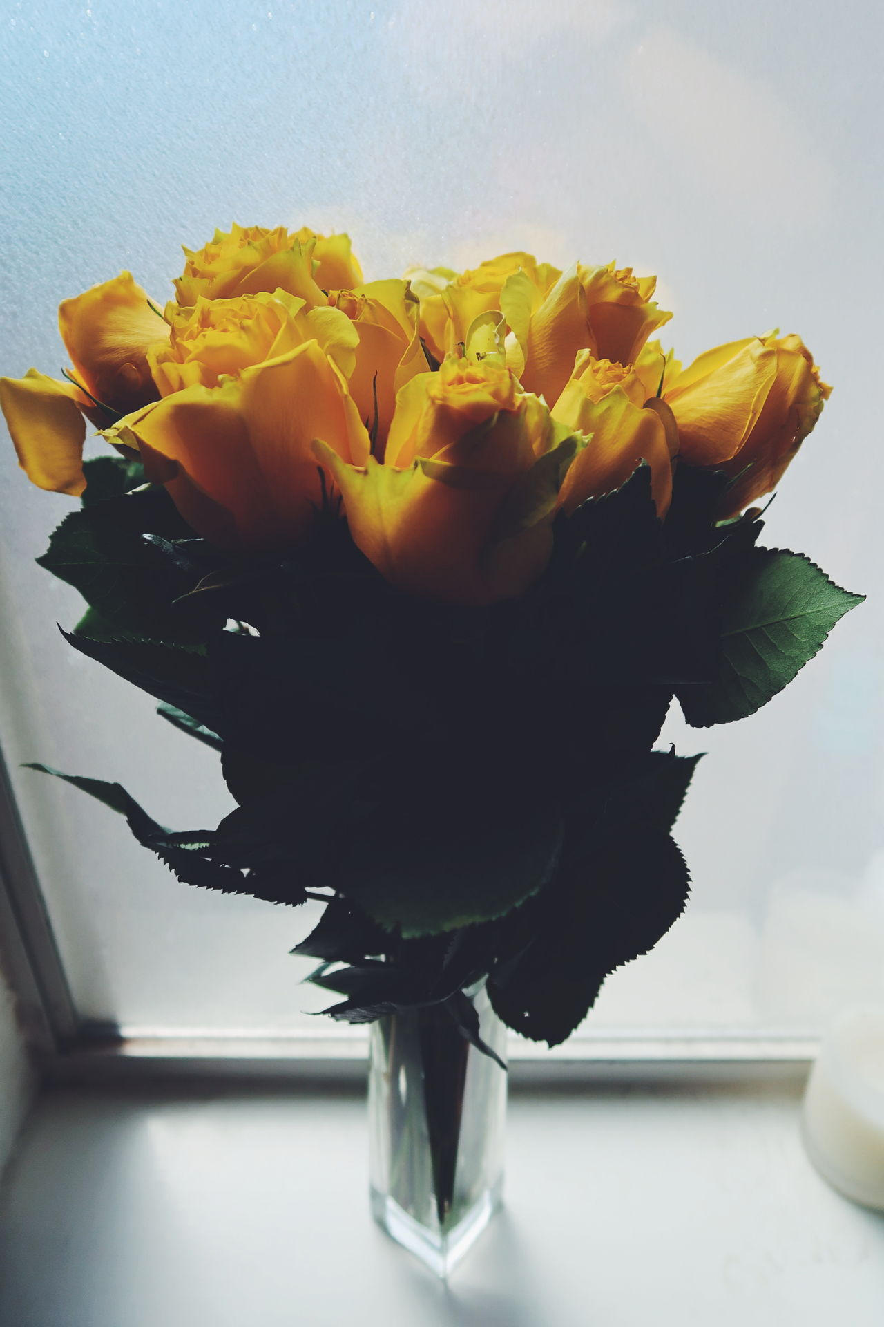 Fragility Indoors  Flower Petal No People Underwater Freshness Nature Close-up Flower Head Day Yellow Yellow Flowers Yellow Rose Yellow Roses