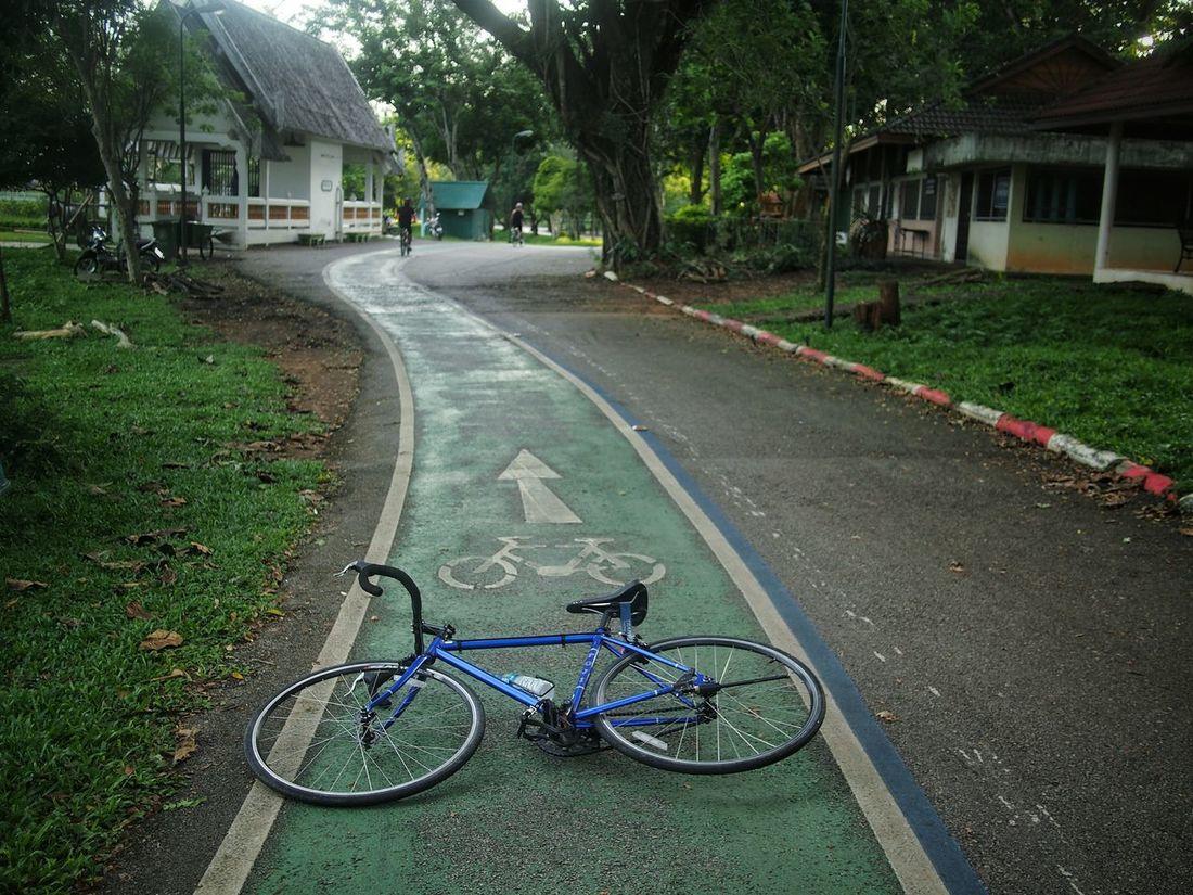 Bicycle Land Vehicle Outdoors Tree Road Nature Park Life No People Relaxing Time Human Ride Fuji Bicycle Sharrow EyeEmNewHere BYOPaper!