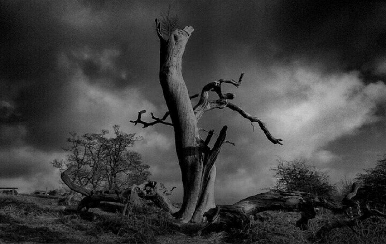 tree, bare tree, cloud - sky, outdoors, sky, no people, day, nature, animal themes, low angle view, animals in the wild, dead tree, branch