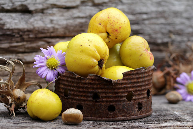 Baumhasel Chaenomeles Close-up Flower Focus On Foreground Food Food And Drink Freshness Fruit Group Of Objects Healthy Eating Herbstastern Indulgence Large Group Of Objects No People Nostalgisch Nüsse Organic Quitten Quittengelb Stillleben Verwittert Yellow Yellow Color Zierquitten