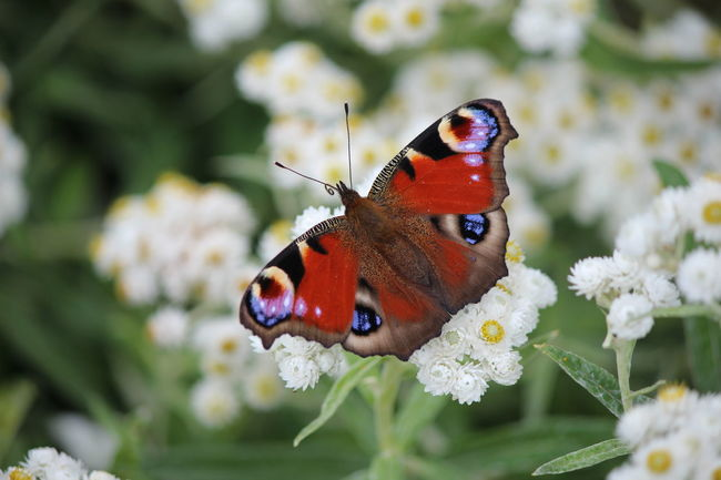 EyeEm Nature Lover Butterfly Nature_collection Nature Flower Collection Natures Diversities