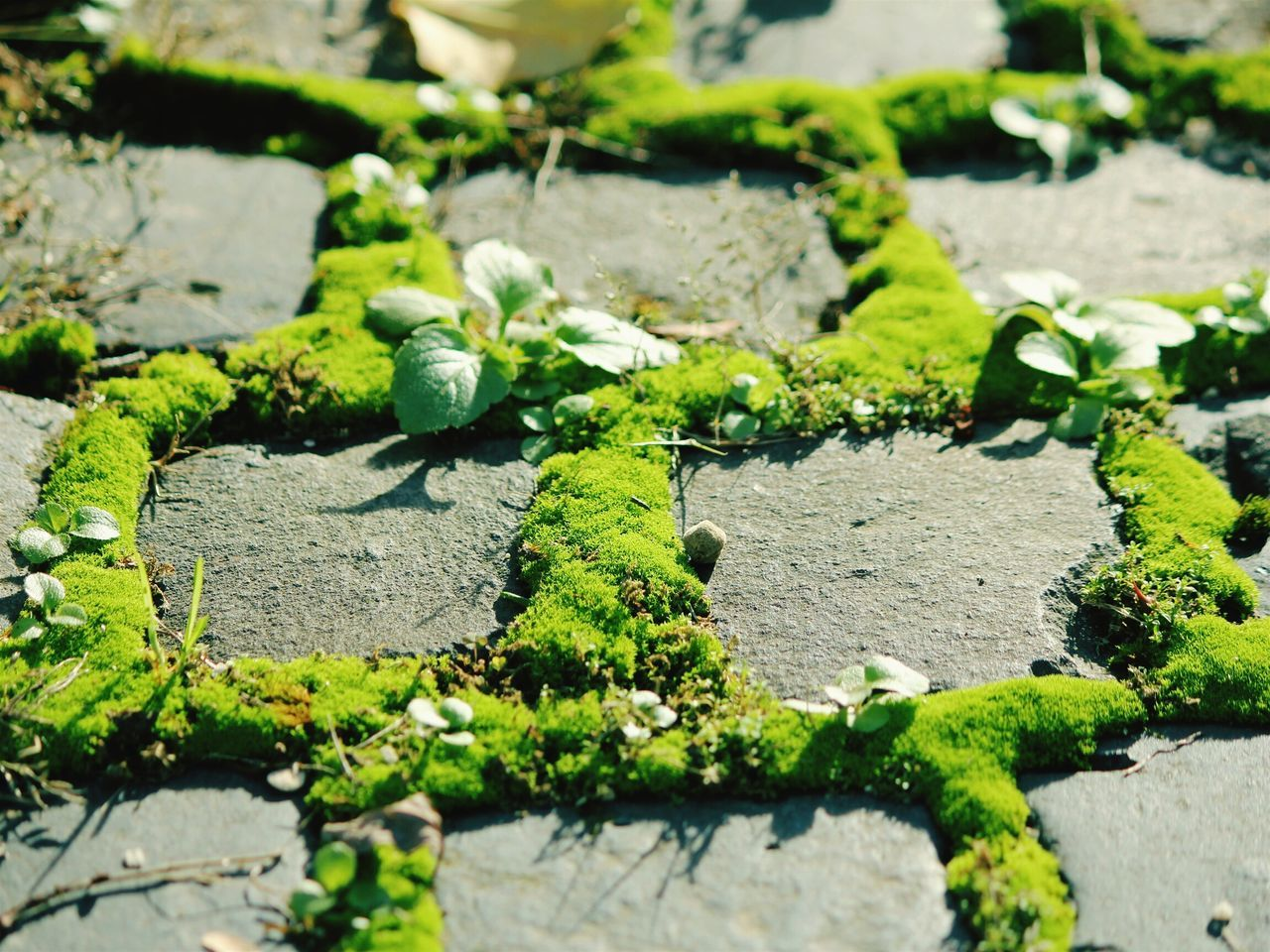 Cobblestone Cobblestones Cobbles Cobblestone Streets Cobblestone Bridge Moss Green Moss Nature Mossy Moss-covered Moss Art Mossy Garden Mossy Rock New Years Resolutions 2016