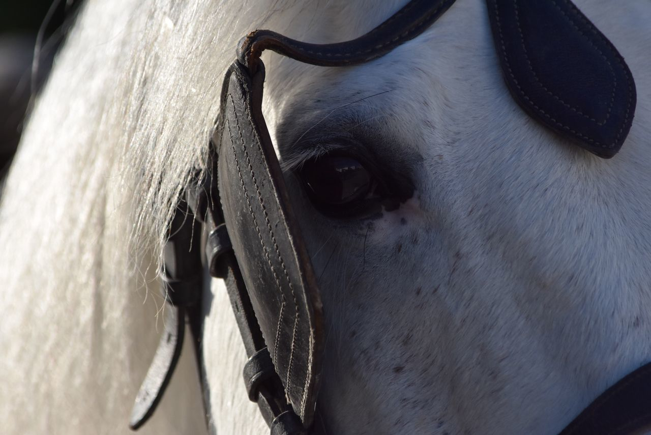 Domestic Animals Horse One Animal Animal Head  Animal Themes Mammal Livestock Close-up No People Day Indoors  Portrait Respect For The Good Taste Exceptional Photographs EyeEm Best Shots Let's Do It Chic! White Horse Focus On Foreground Black & White