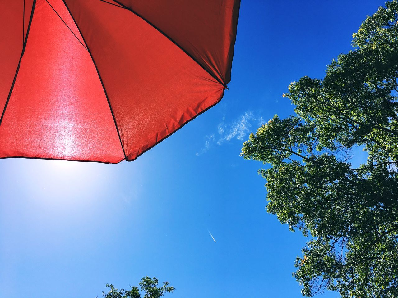 Low Angle View Of Parasol Against Clear Sky Back Lit Beach Umbrella Beauty In Nature Blue Clear Sky Close-up Color Image Copy Space Day Horizontal Low Angle View Nature No People Outdoors Parasol Photography Protection Red Single Object Sky Summer Sunlight Sunshade Tree