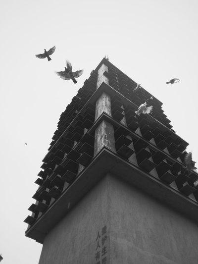 【Fly】 Smartphonephotography Vscocam Black & WhiteDocumentary Photography