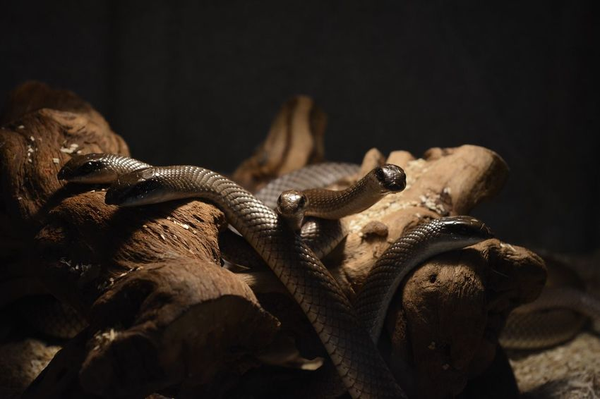 Snakes on the plain! Snake Snakes Reptile Nature Photography Eye4photography