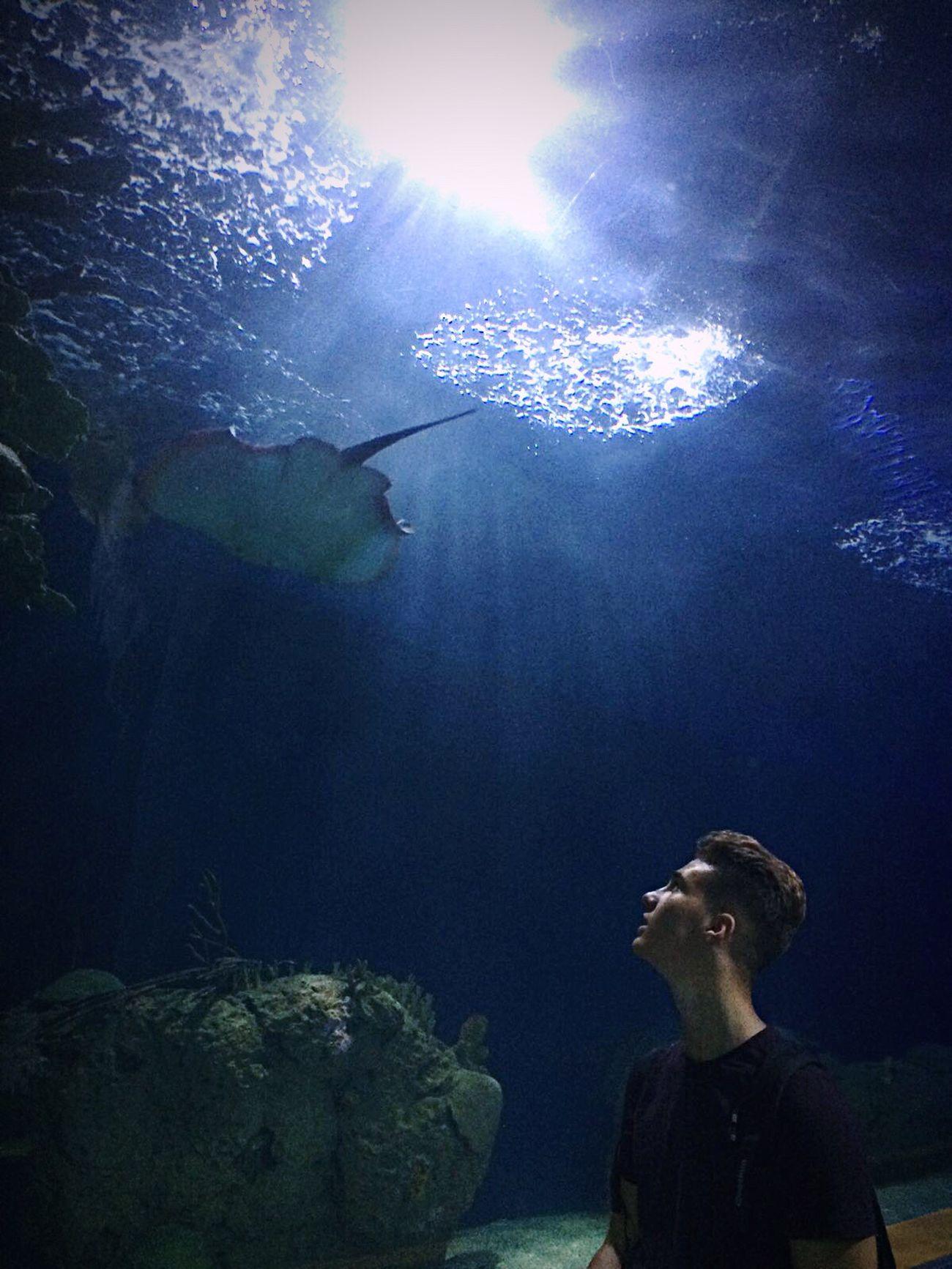 Oceanographic València Shark Water Spain♥ Aquarium Underwater