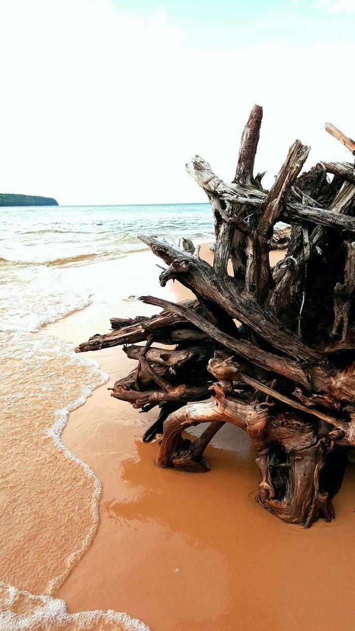 Beach Sunlight Horizon Over Water Sand Tree Beauty In Nature Day Scenics Seaweed Water Nature Sea Outdoors Sky