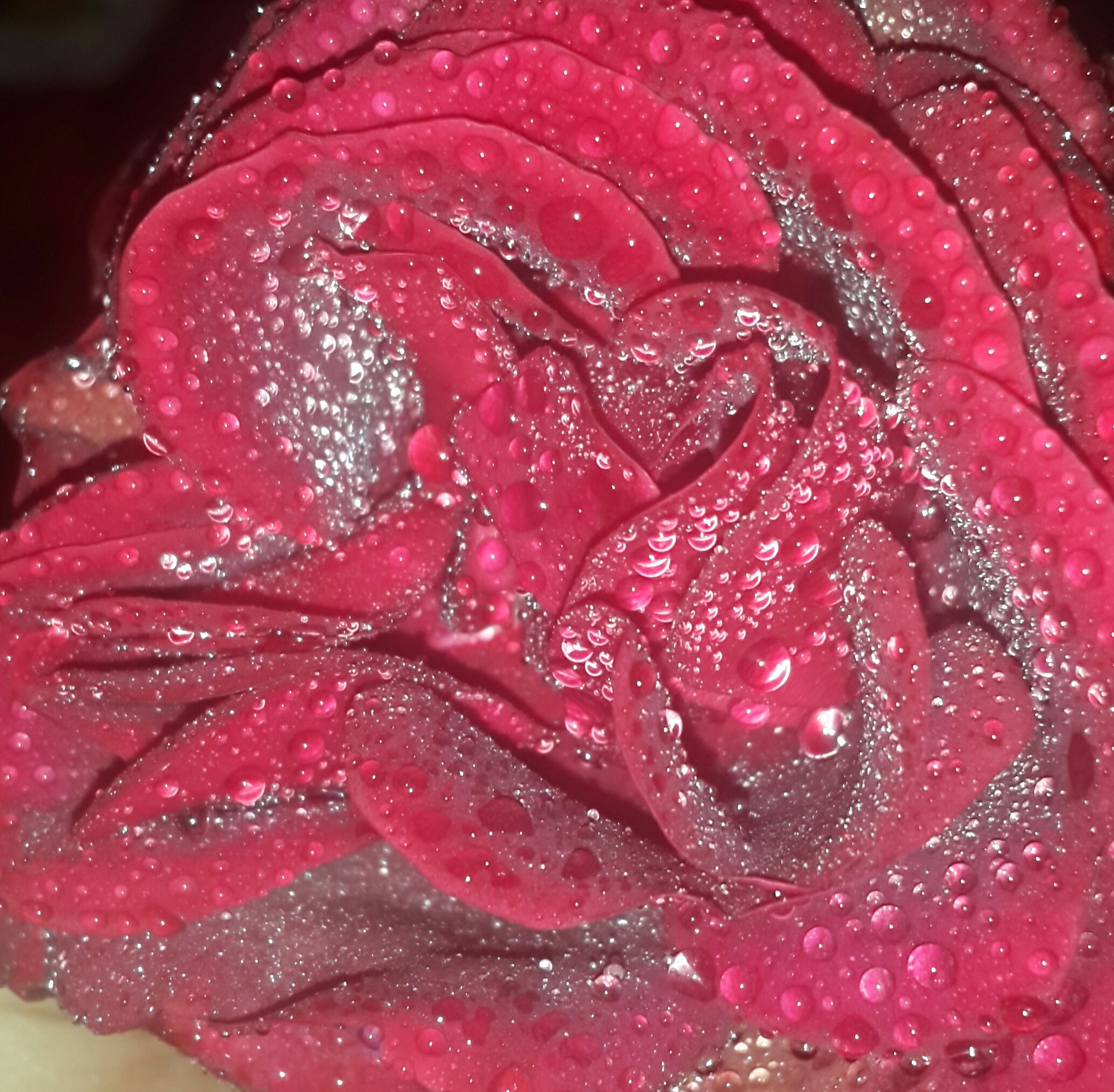 freshness, red, drop, close-up, water, wet, petal, flower, flower head, pink color, fragility, rose - flower, food and drink, high angle view, beauty in nature, single flower, no people, nature, indoors, food