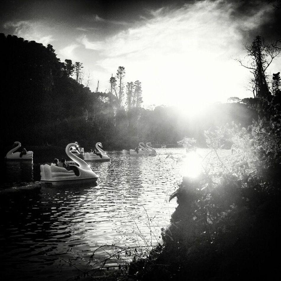Lagonegro Gramado Blancoynegro Blackandwhitephotography Melancholic Landscapes Bwaddicts Lightandshadow Lake Sunset Riograndedosul