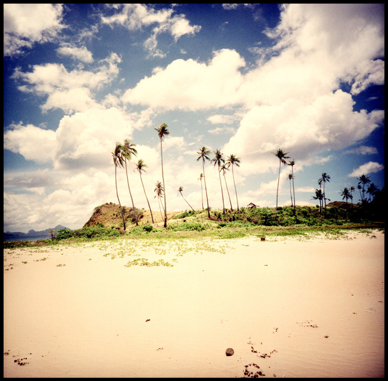 The Twin Beach of Nacpan, el Nido Analogue Photography Beach And Sky Beach Life Clouds Coconuts Dream Beach El Nido Lomography Lonely Coconut Medium Format Nacpan Nature No People Ocean Outdoors Palawan Paradise Sand Summer The Great Outdoors - 2017 EyeEm Awards Toothpic Palms Travel Treasure Island Trip Xpro