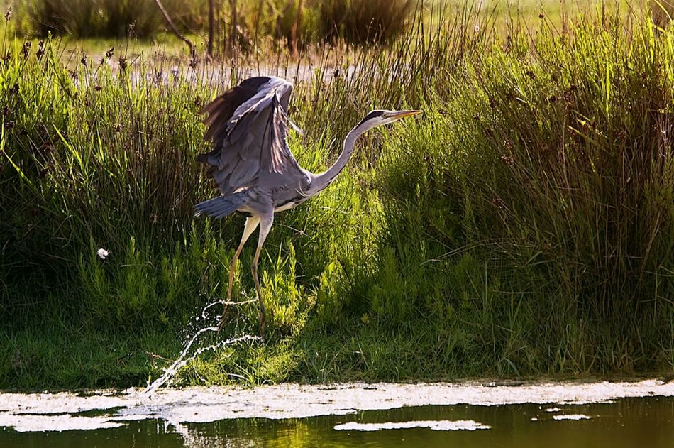 Hanging Out Nature Landscape Wildlife Natural Beauty Fauna